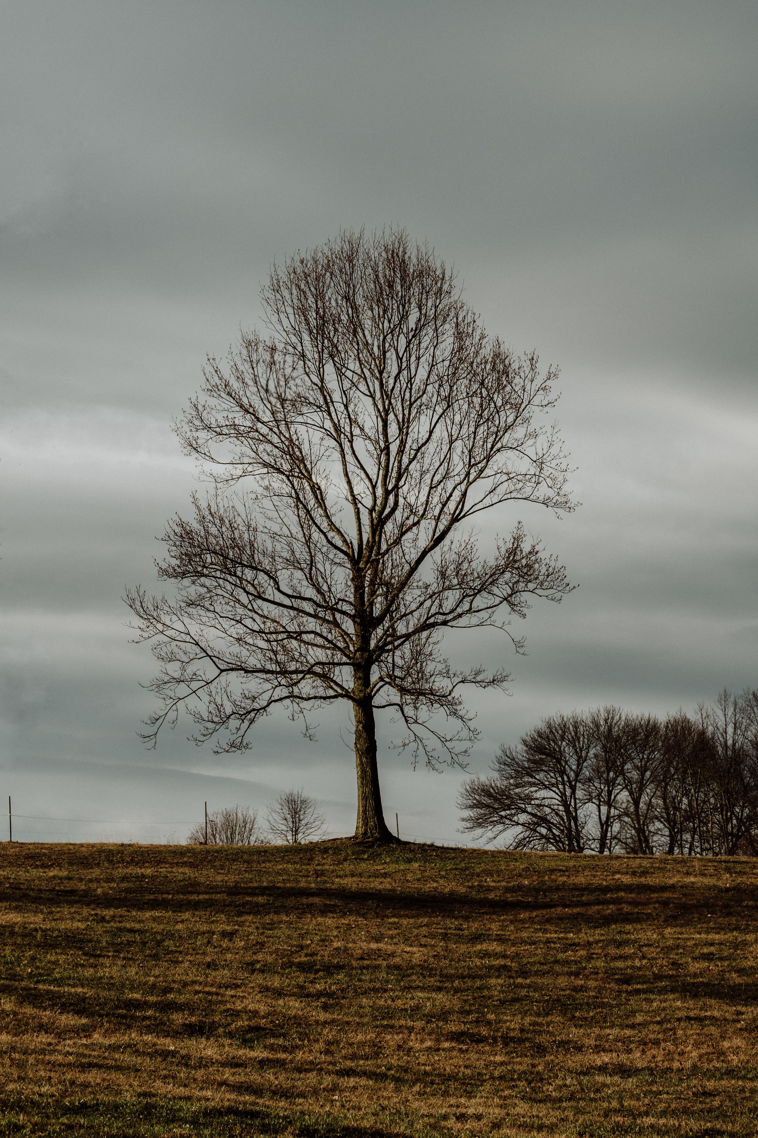 Ive taken photos of this tree more than any other tree and it still catches my attention on the drive in. ( Obviously )