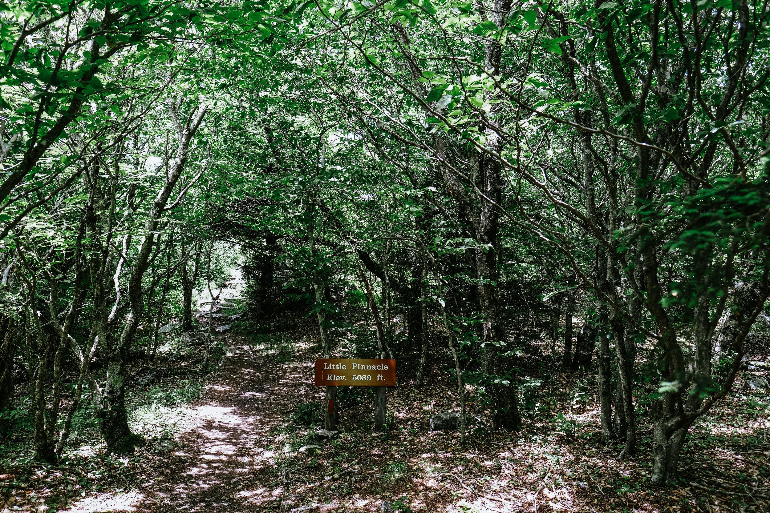 DSCF7768.jpg