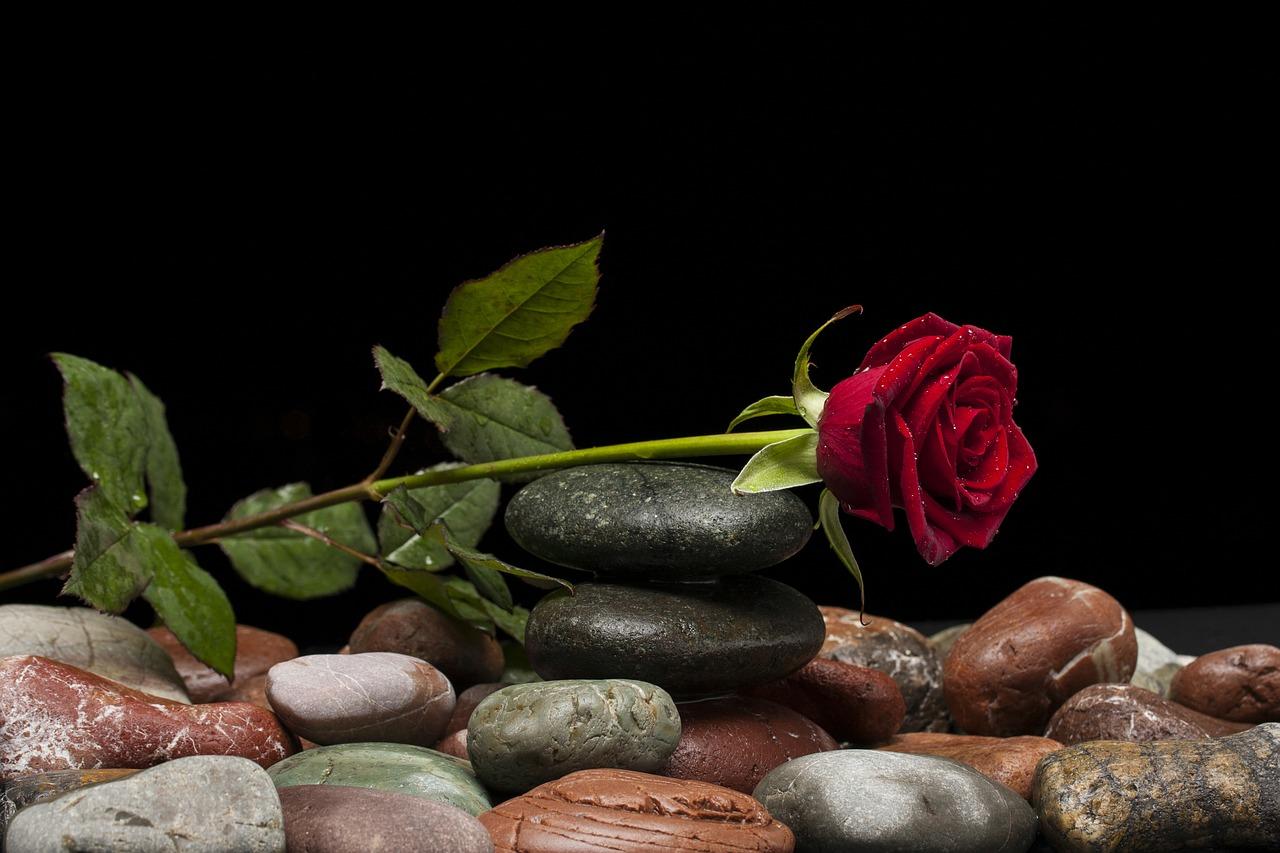 rose-2408580_1280.jpg