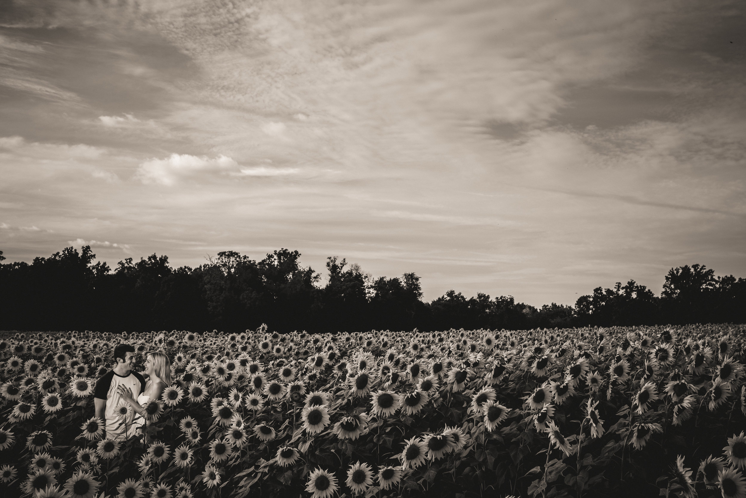 Sunflower Wheres Morgan-7.jpg