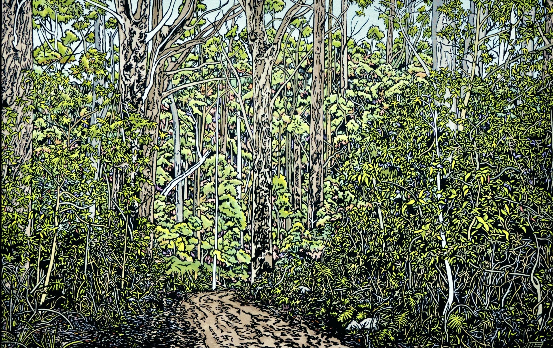 Dense forest near Springbrook
