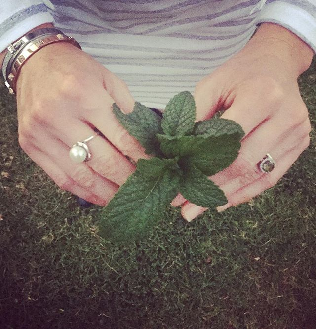 Freshly picked garden mint - going straight into my water jug 🌱💦☀️