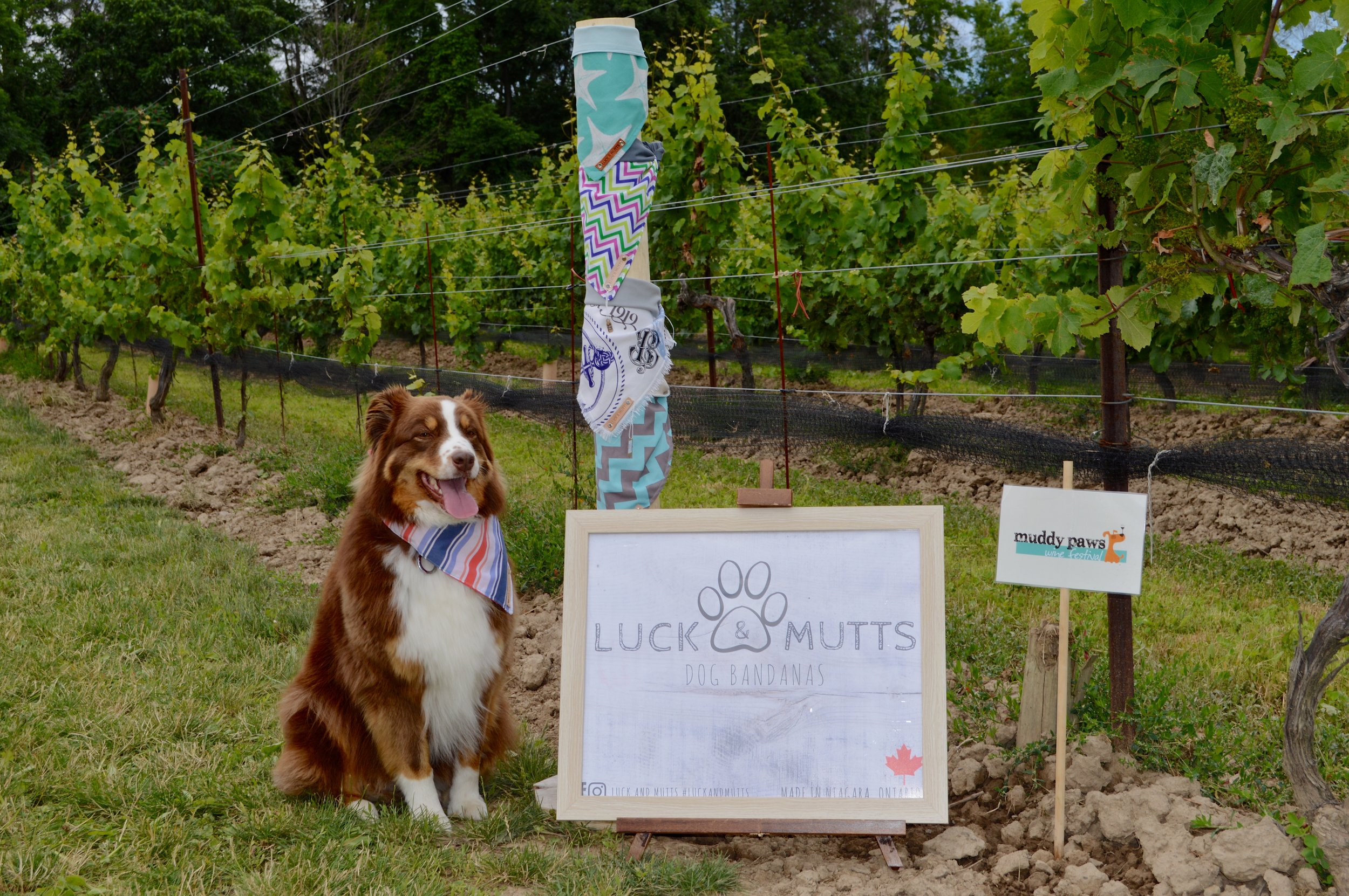 Muddy Paws at Vineland Estates Winery in Vineland Ontario
