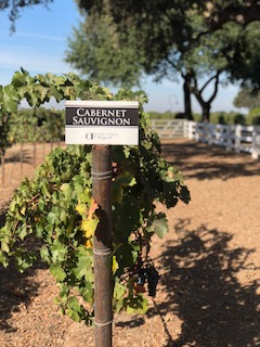 wine tasting in lodi california .jpg