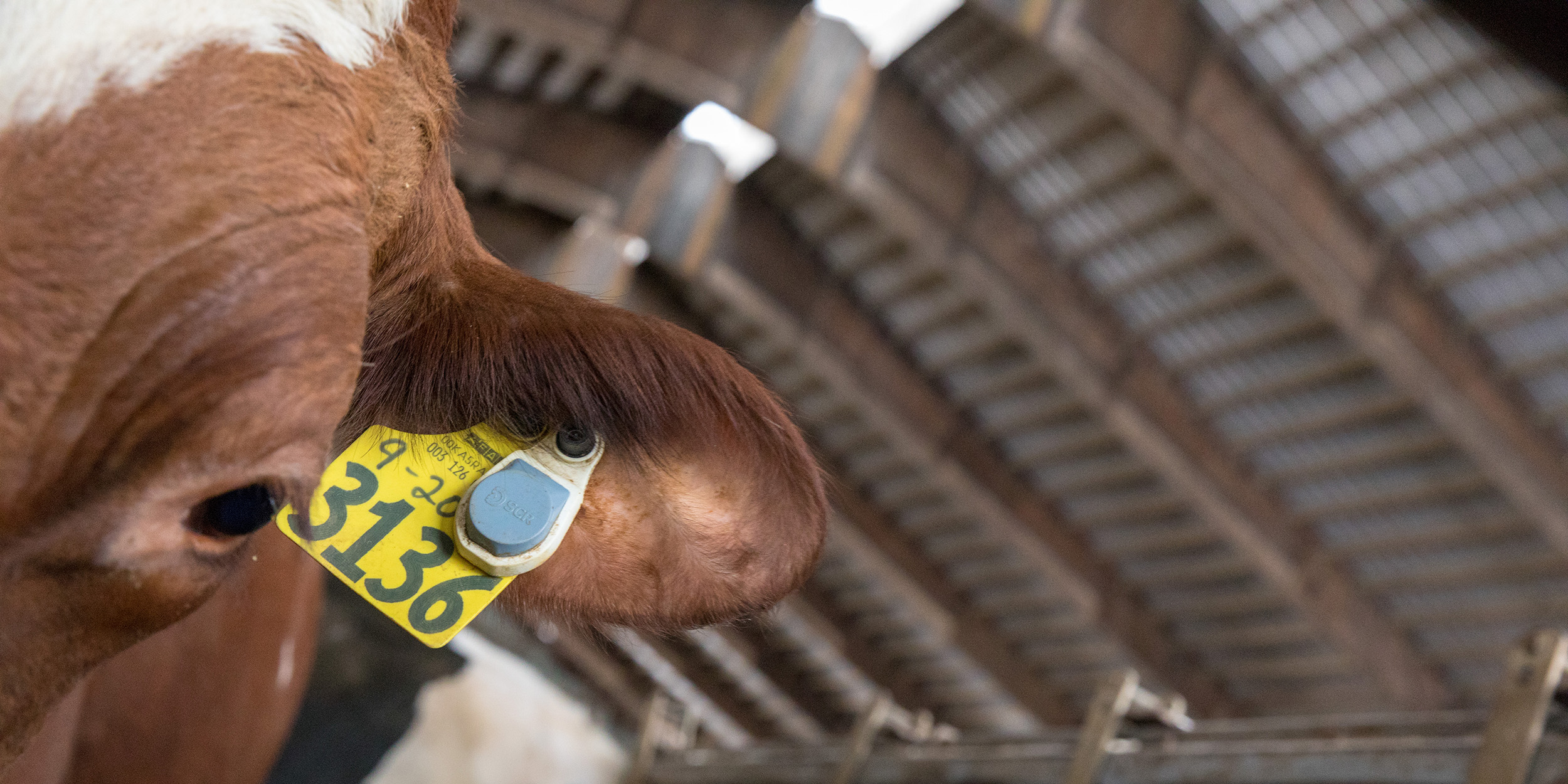 Morrill Dairy  026.jpg