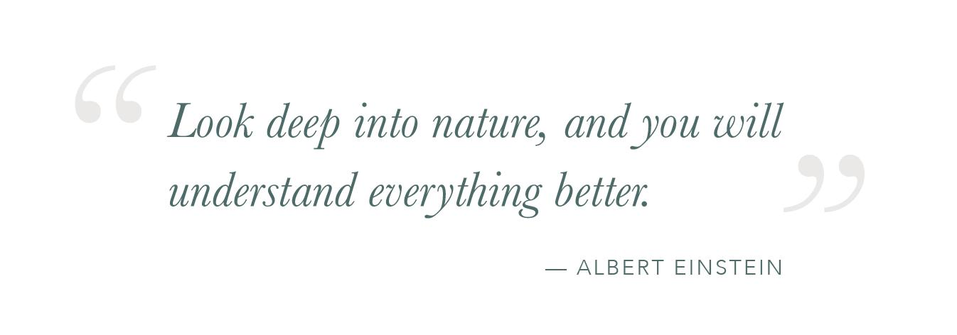 Einstein-Quote-Nature.png