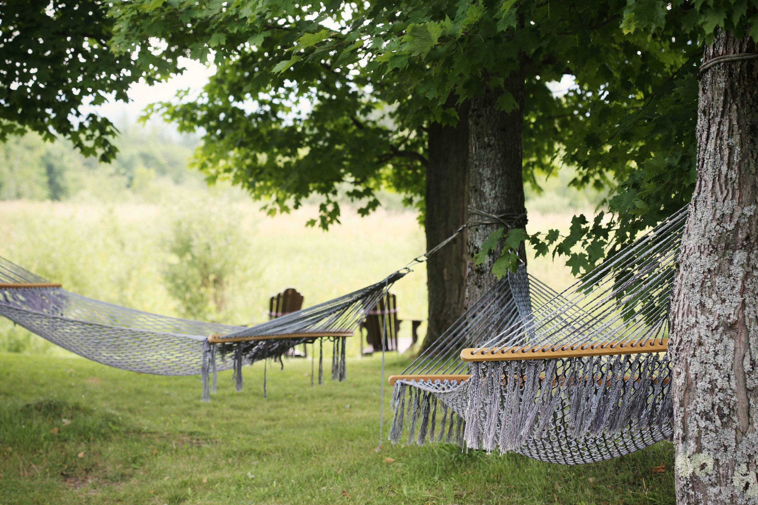 health-benefits-of-plants-hammock.jpg