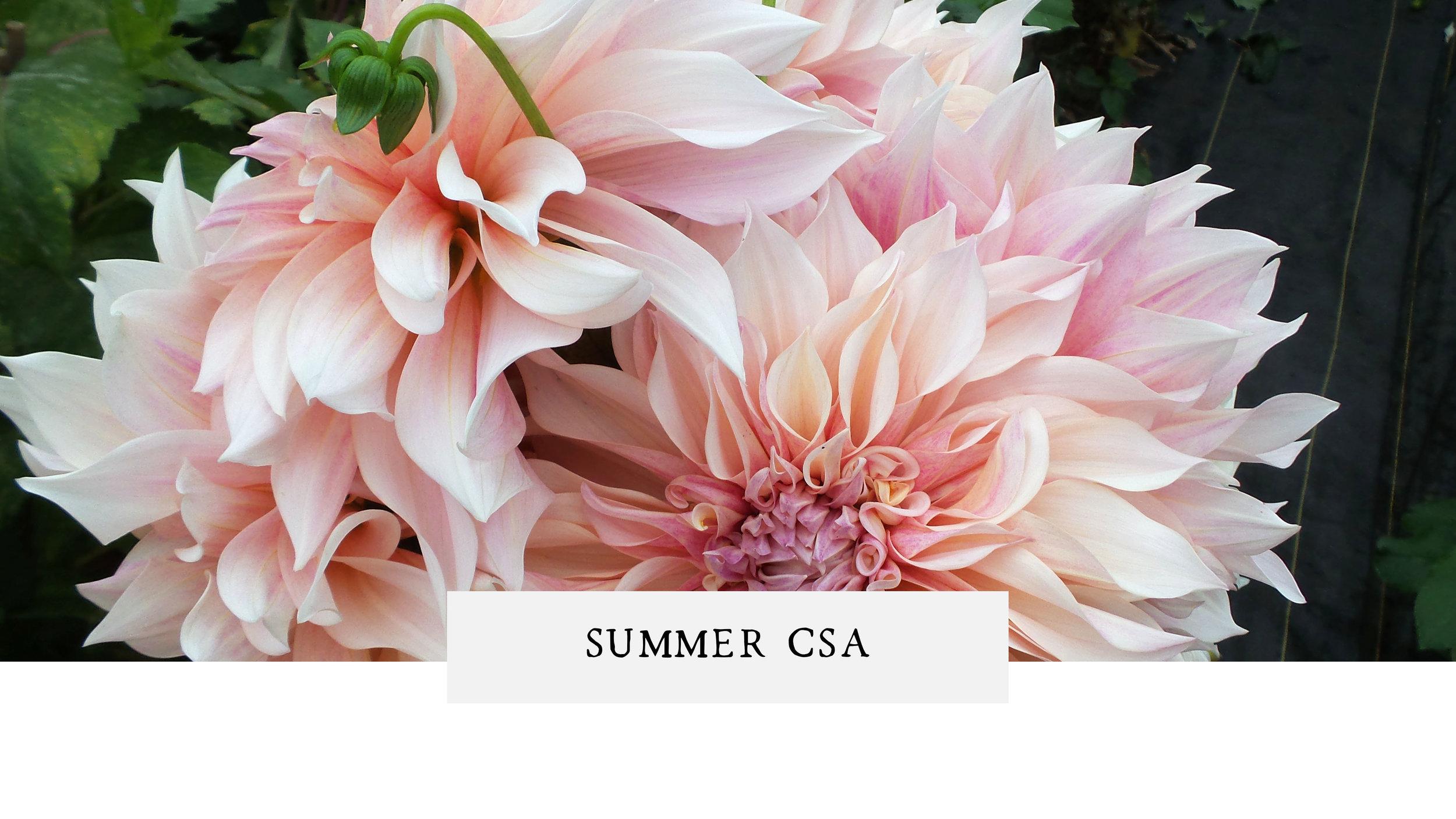 PassifloraSummer CSA.jpg