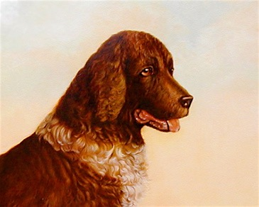 Close Up of Springer Spaniel Painting by Jennifer Chapman