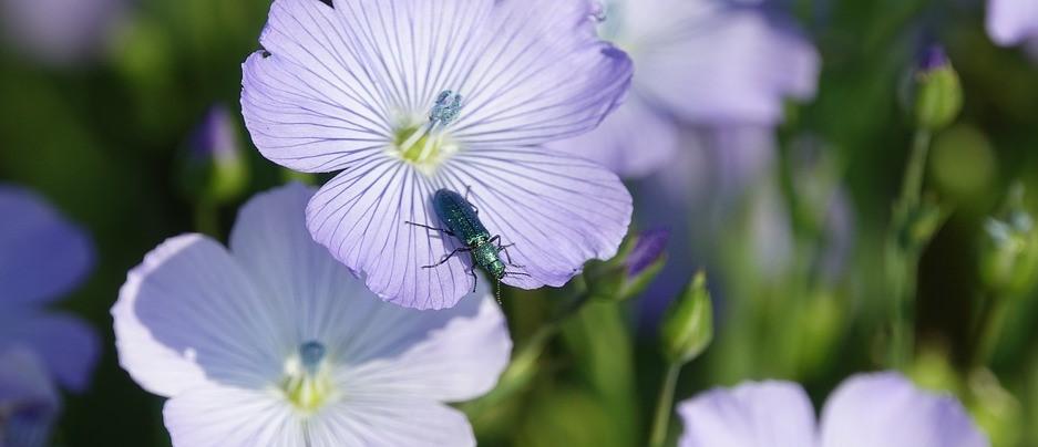 fleur-de-lin.jpg
