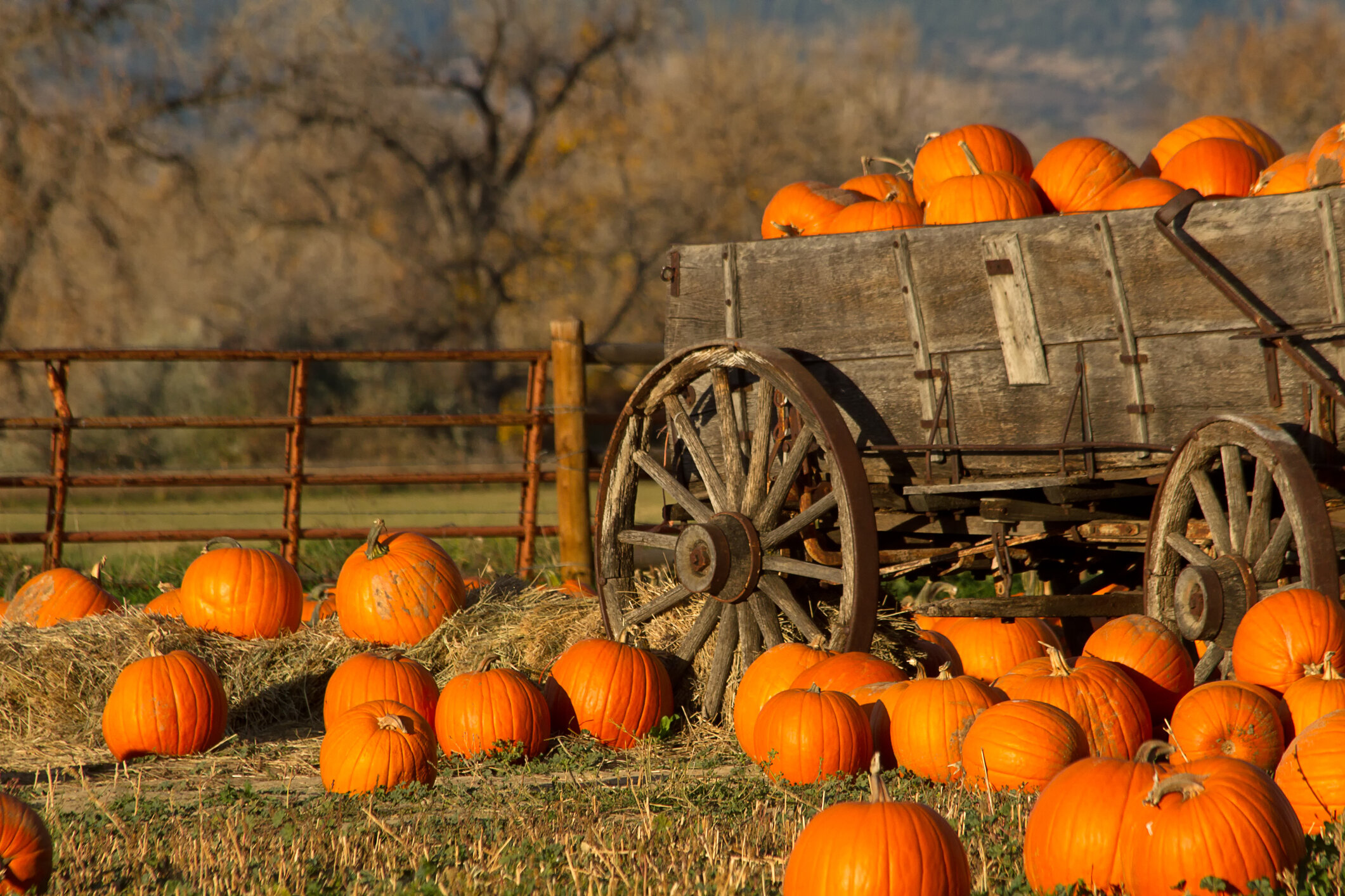 pumpkinwagon.jpg