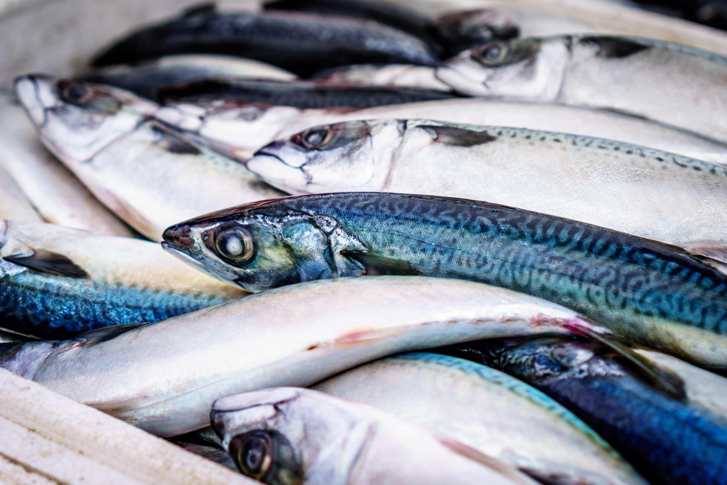 fish-fishes-food-85528.jpg