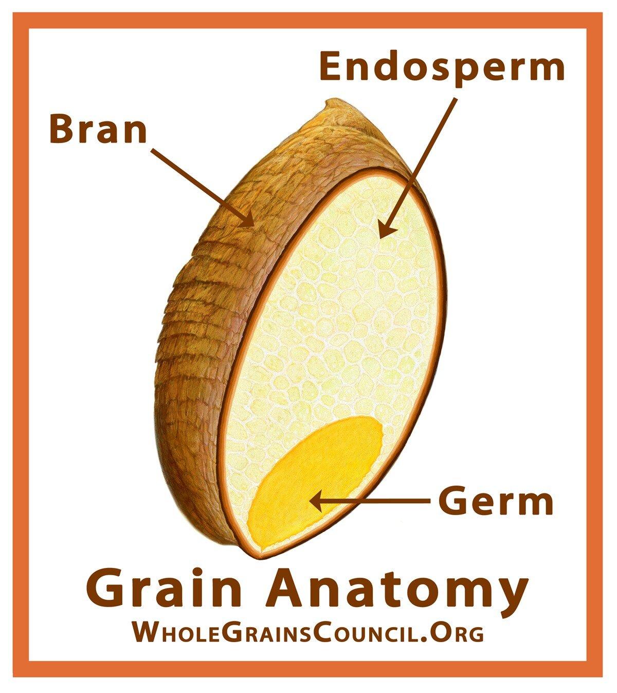 Whole Grain 3.jpg