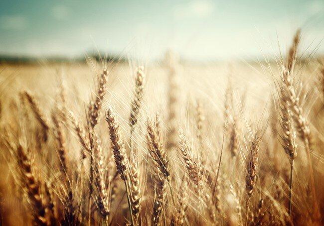 Whole Grain 6.jpg