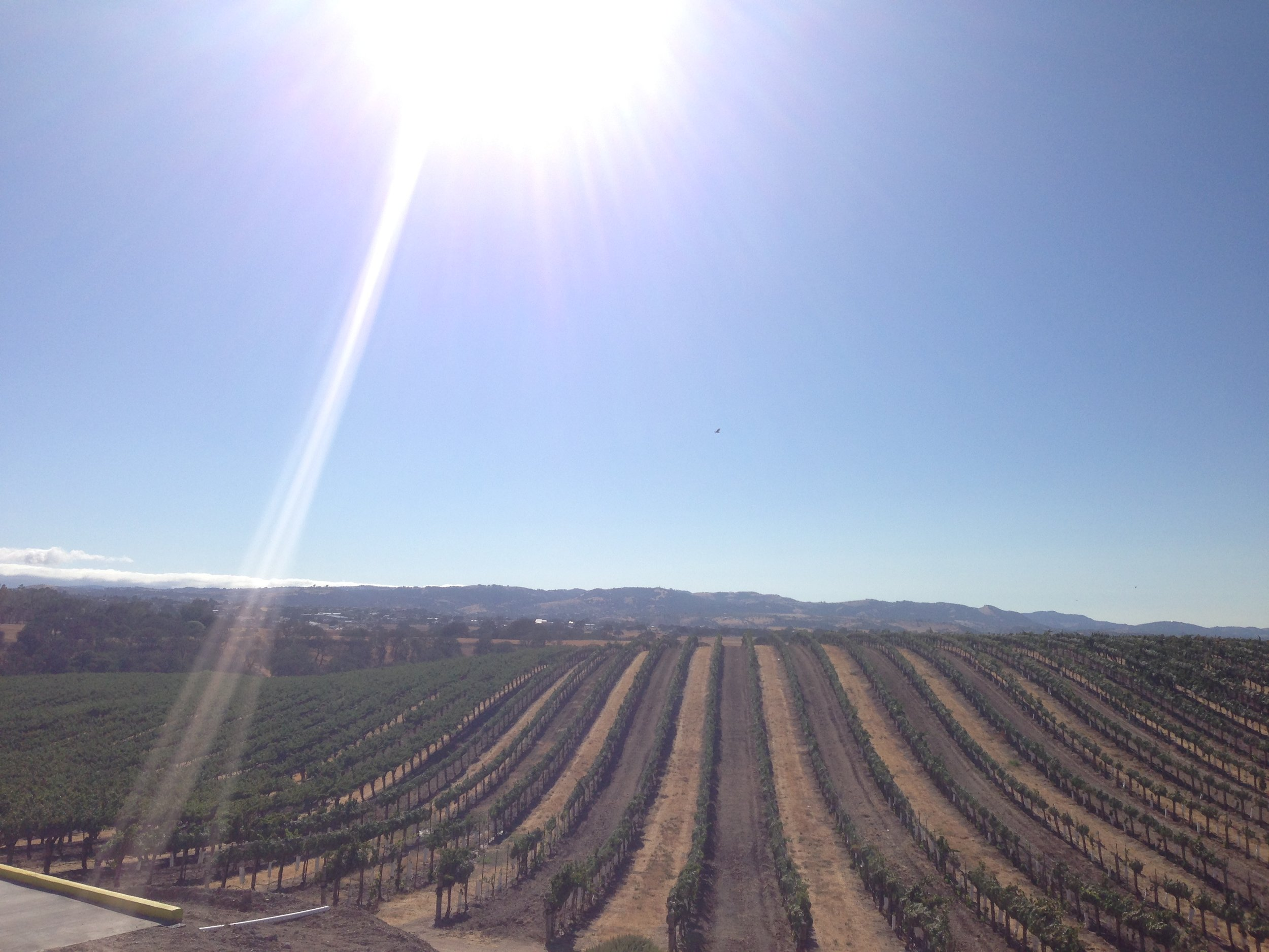 eberle-vineyards-paso-robles.jpg