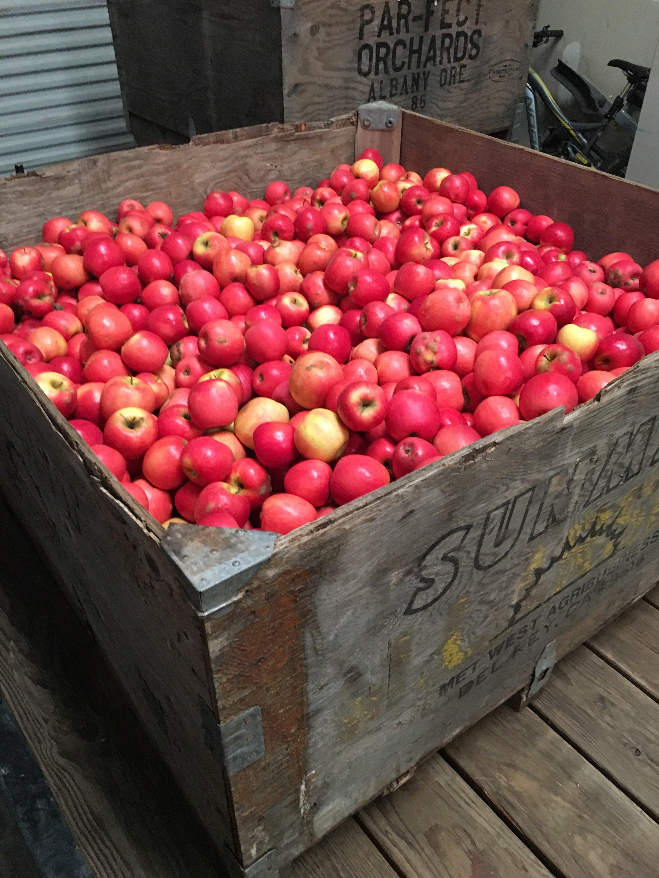 lassen-cider-apples.JPG