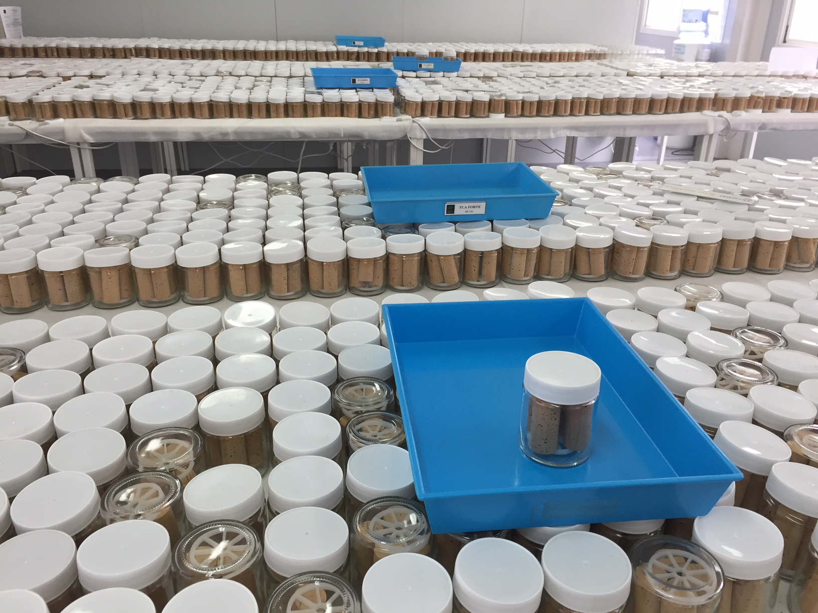 corks being tested for any TCA taint; any guilty samples are placed on the blue trays