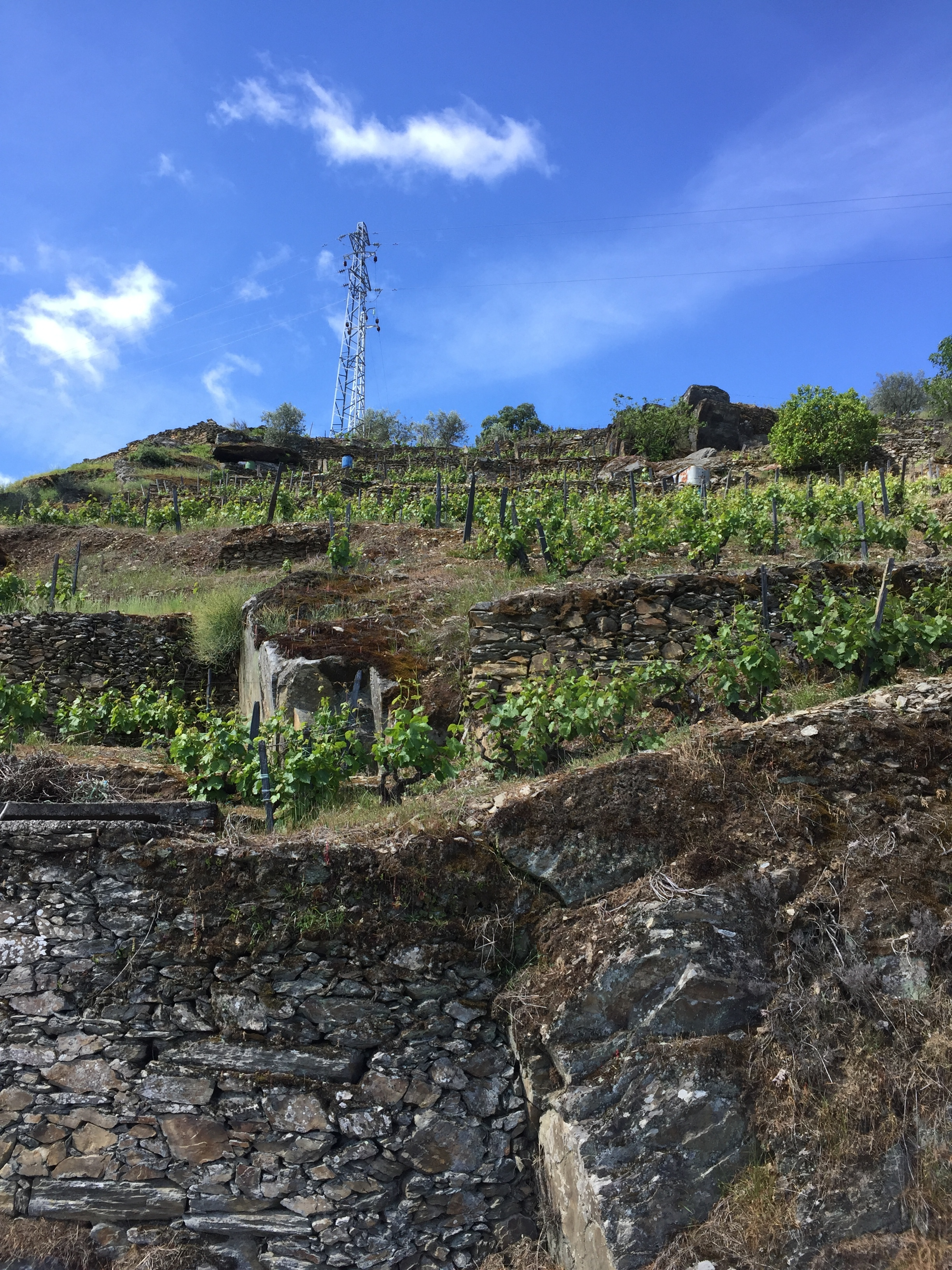 traditional terraced vineyards