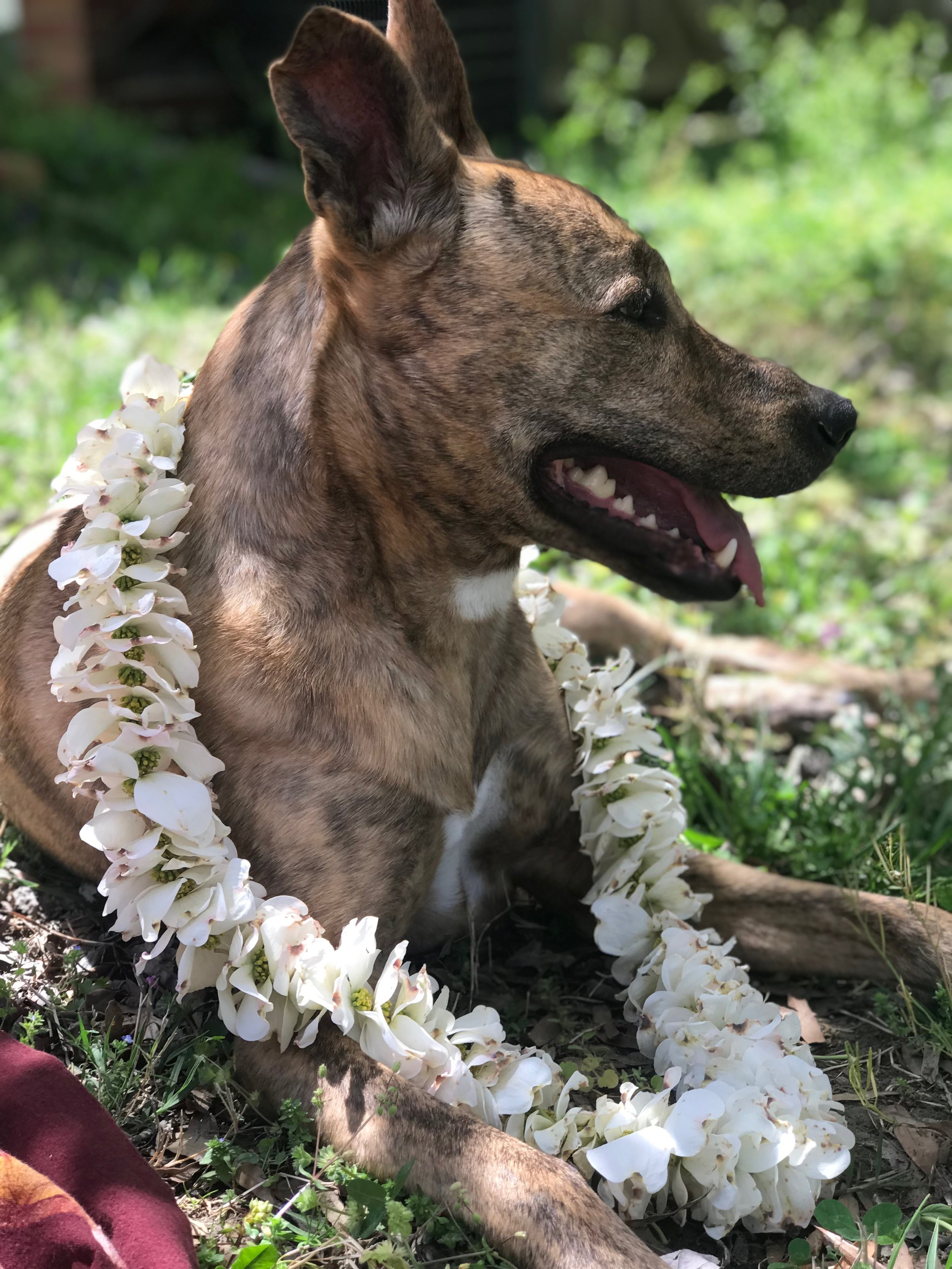 karuna with her dogwood flower mala.