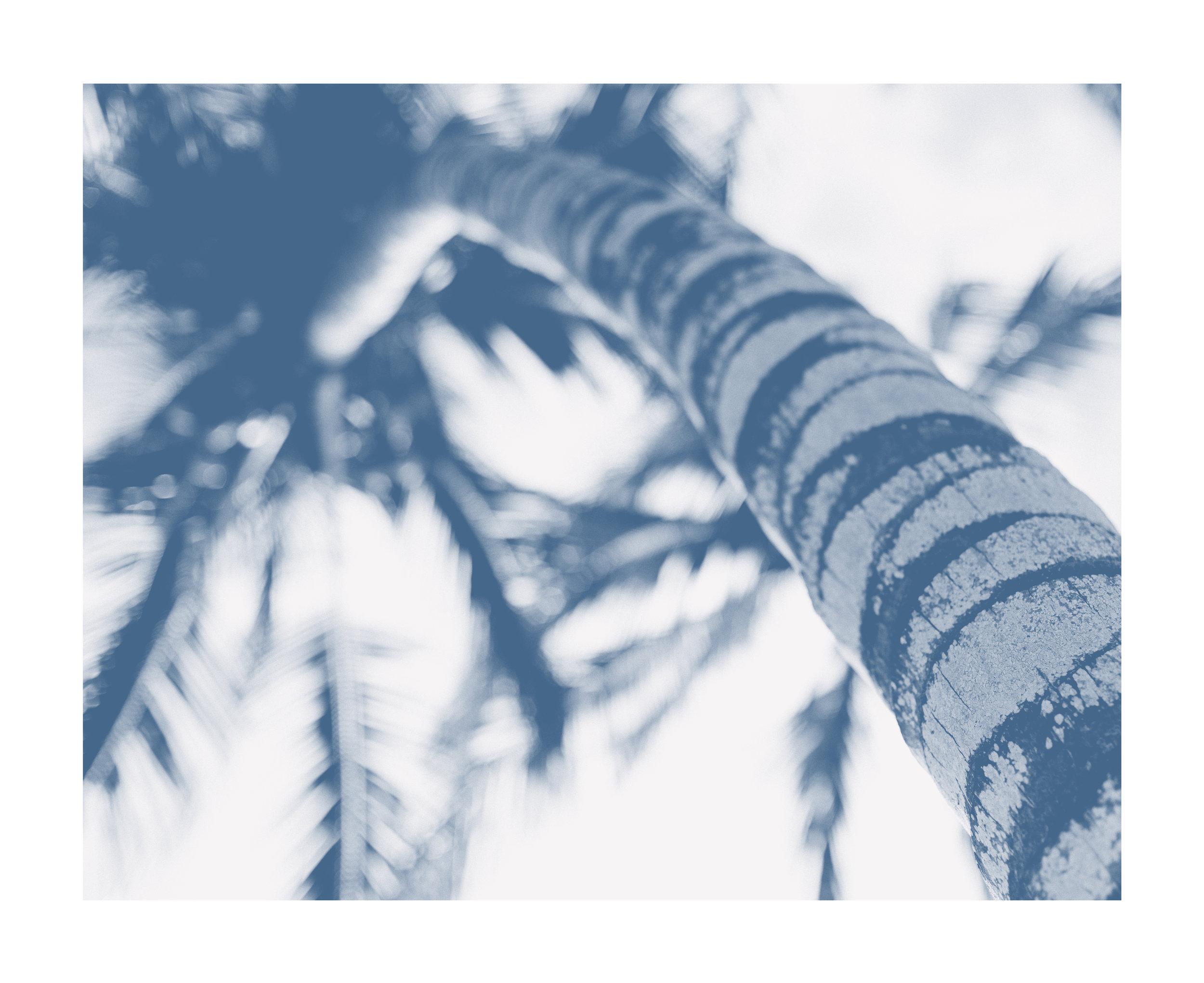 sunup_tree.jpg