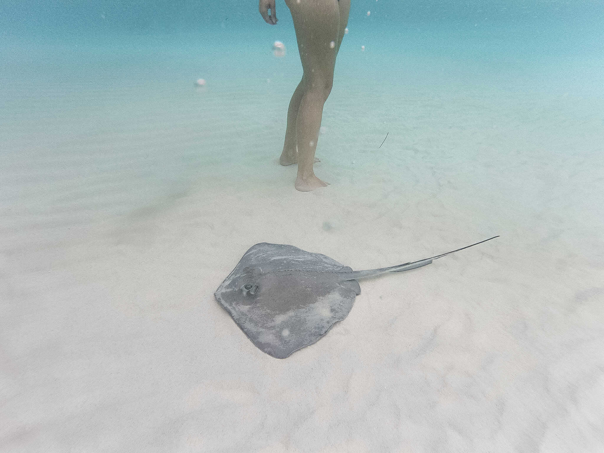 Stingray City tours are the most amazing excursions you'll take in the Cayman Islands. Snorkeling Grand Cayman will not only introduce you to stingrays, but can also take you to the amazing Starfish Point Grand Cayman! Spend the day in the middle of the ocean, exploring the Caribbean waters that make the Cayman Islands so special! #grandcaymanisland #caymansislands #stingraycitygrandcayman #snorkeling #caymanislandsthingstodo
