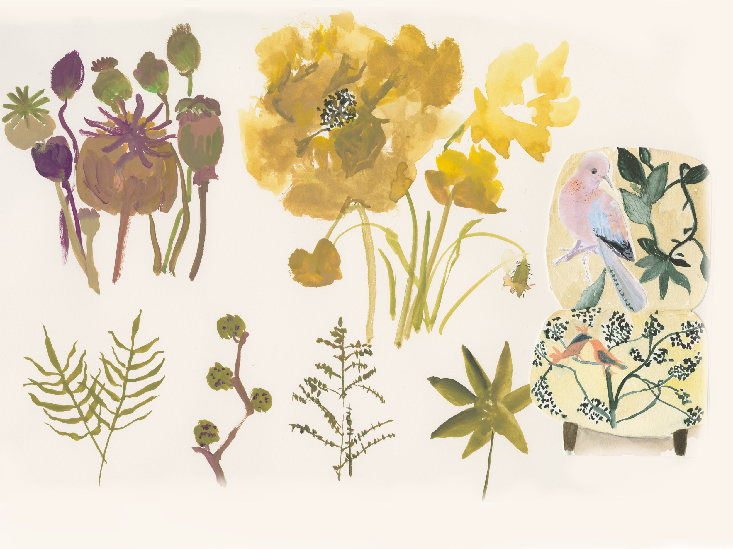 Poppy-flora.jpg