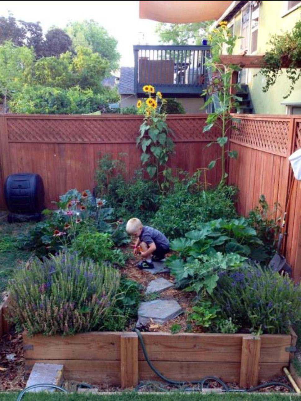GardenWren2.jpg