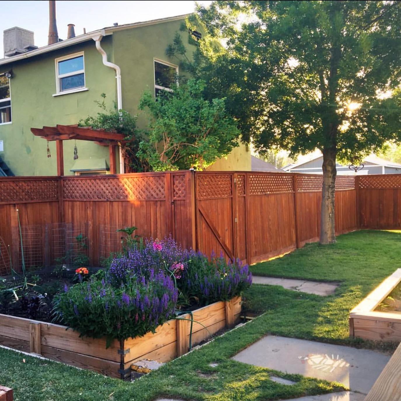 GardenWren.jpg