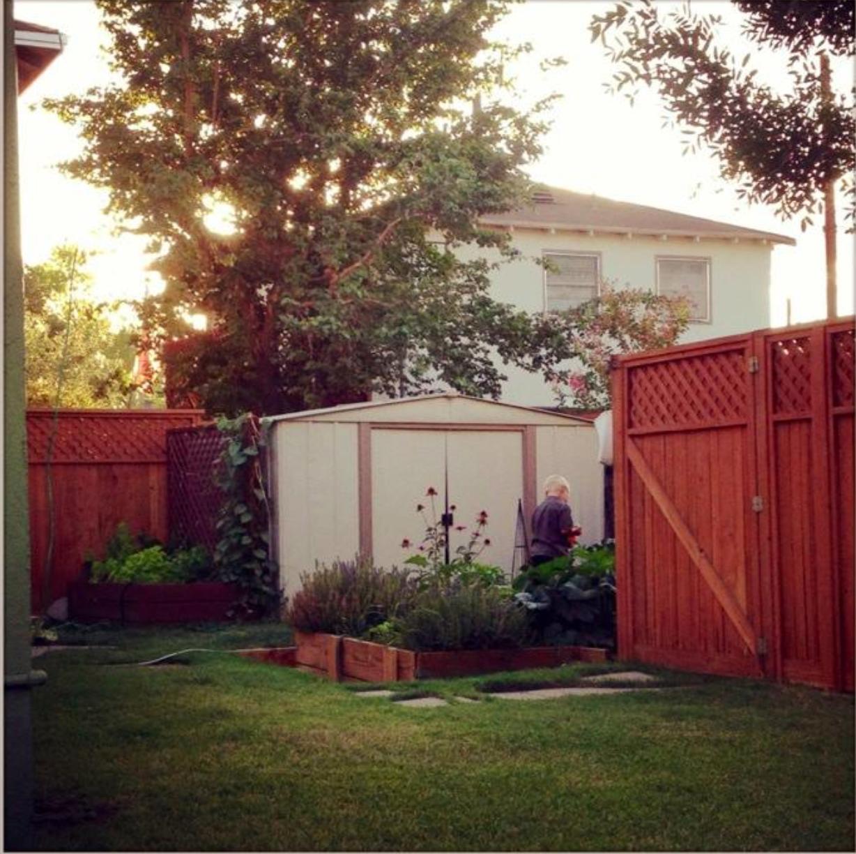 GardenWren3.jpg