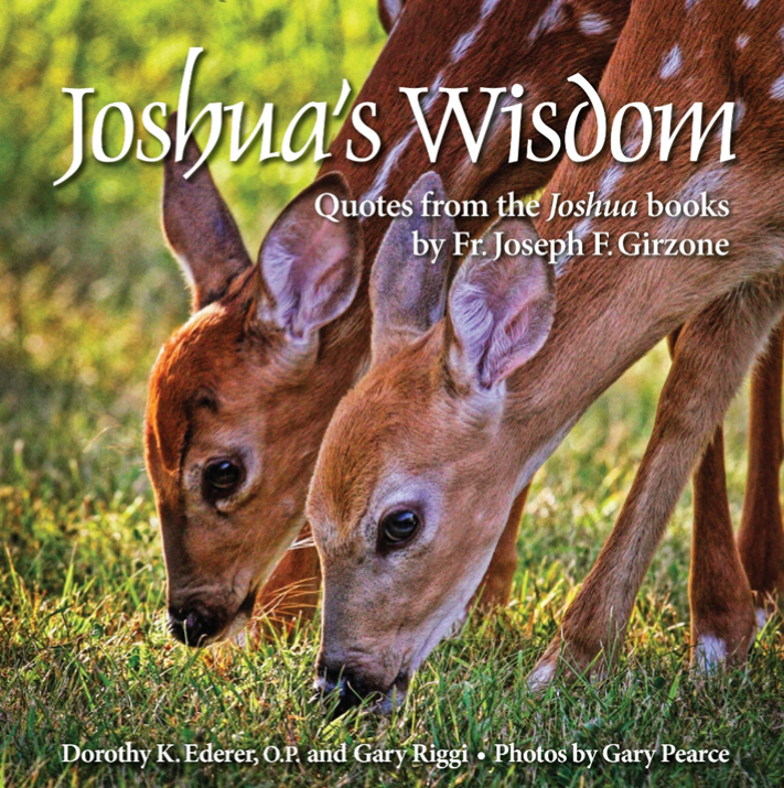 Joshua's wisdom.png