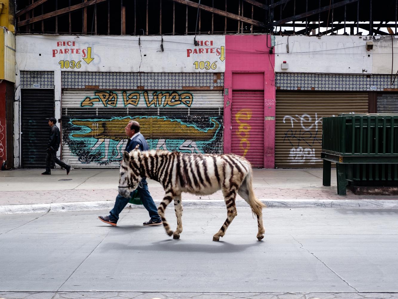 painted_donkey-Cookwilltravel-Tijuana.jpg