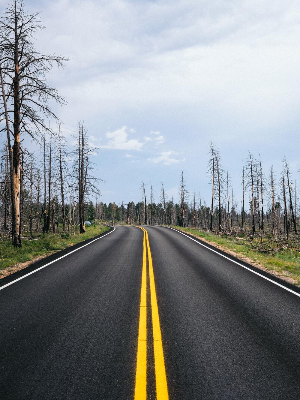 Cookwilltravel-Road_Trip.jpg