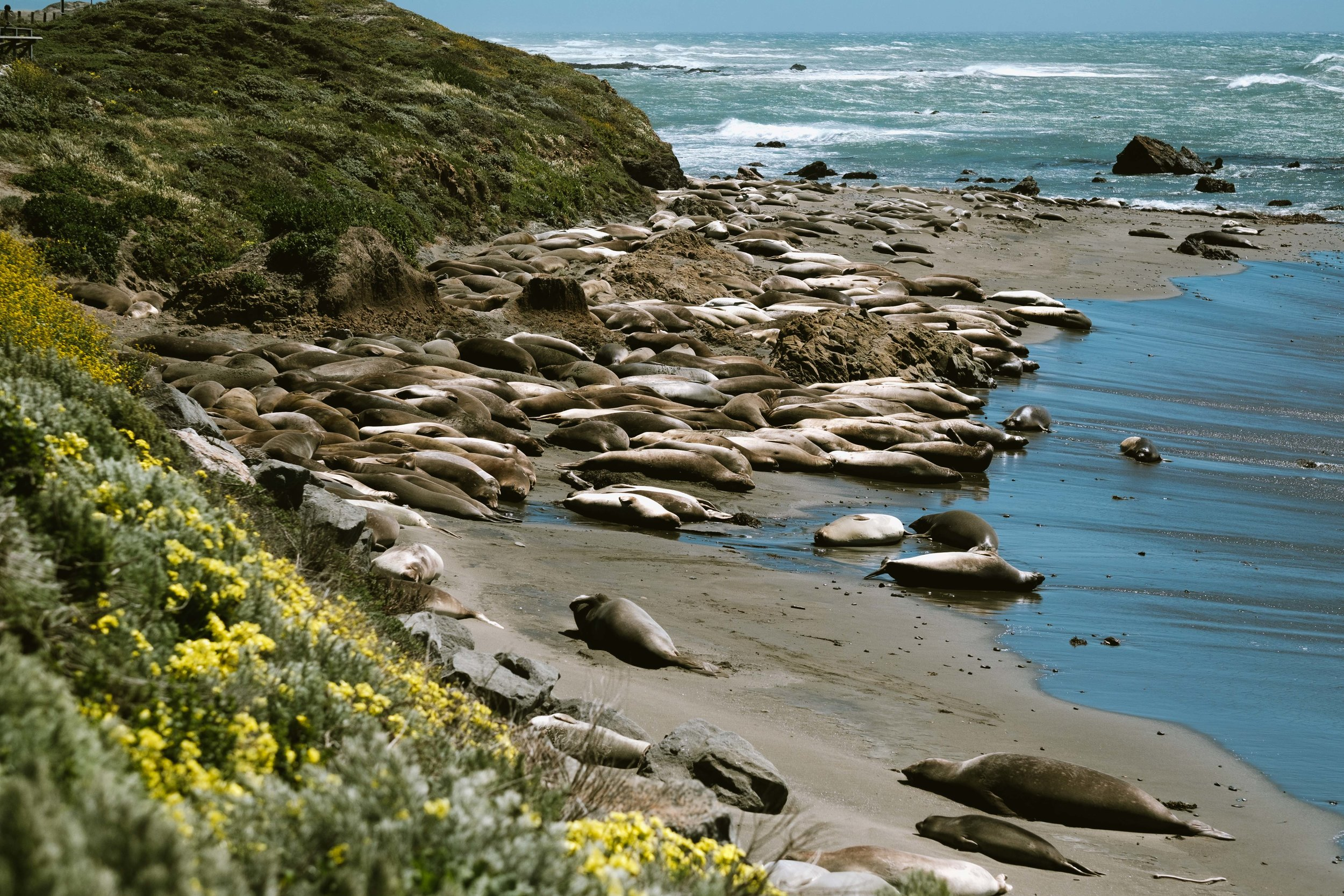 Cookwilltravel - Huckberry - Big Sur > Los Angeles - DSCF7127.jpg