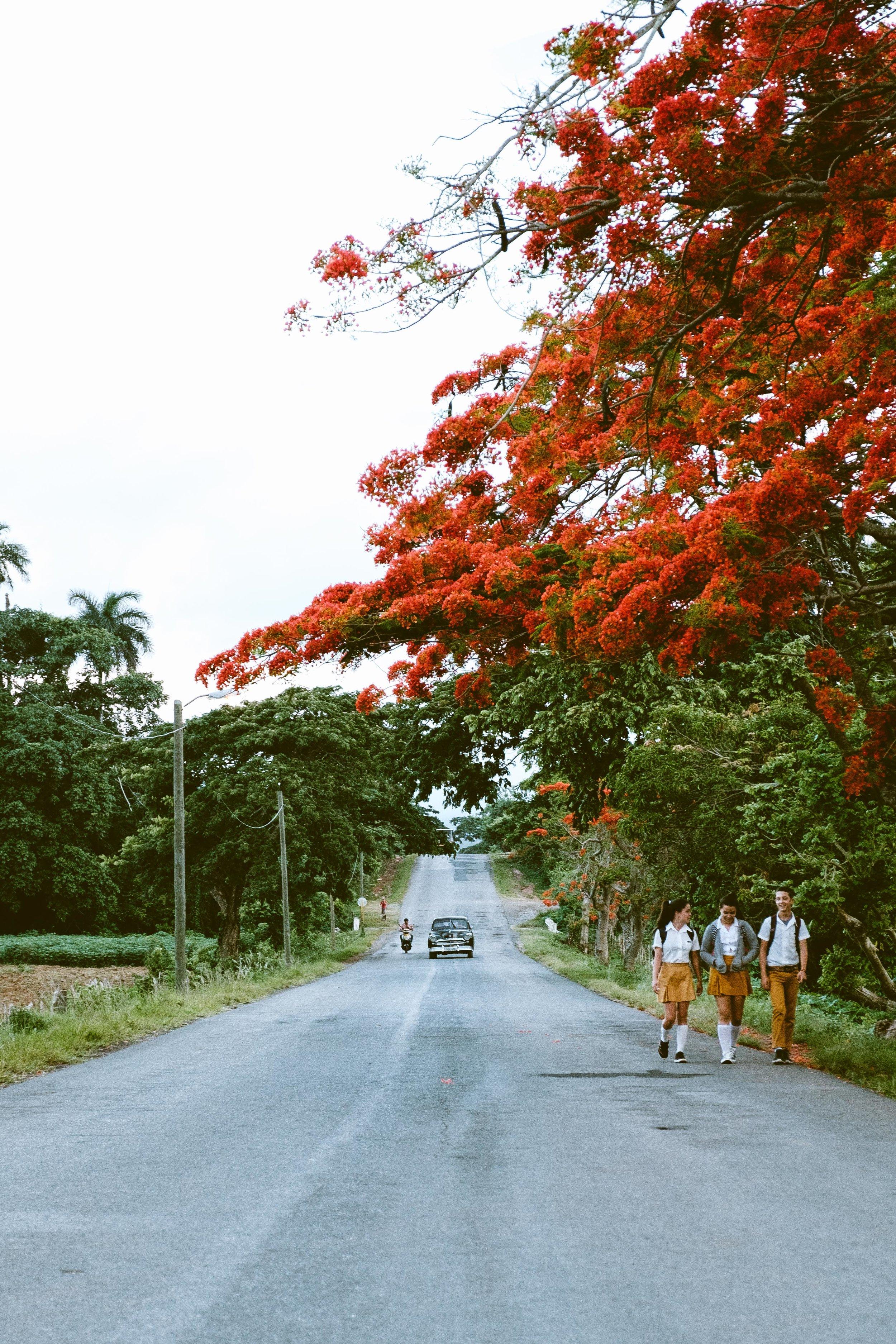 Cookwilltravel - Cuba - DSCF8215.jpg