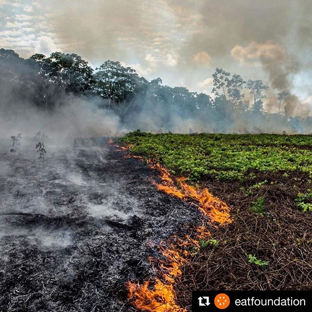 🆘 Amazon = 20% of air we breathe  🔥So what can YOU do? ❌ Be conscious, get educated. Cattle ranching is one of the primary drivers of Amazon deforestation. It's not just on fire for no reason.   ❌Eliminate or reduce consumption of beef and share the message.   ❌ @eatfoundation repost ・・・ The lungs of the planet are on fire. The Brazilian Amazon – home to 1 million Indigenous people and 3 million species – has been burning for weeks but has received almost no news coverage. There have been 74,000 fires in the Brazilian Amazon since the beginning of this year (National Institute for Space Research, Brazil). 📸 @mohsinkazmitakespictures   The largest rainforest in the world is a critical piece of the global climate solution. Without the Amazon, we cannot keep the Earth's warming in check. So what can YOU do?   🌎Be a conscious consumer, taking care to support companies committed to responsible supply chains. Eliminate or reduce consumption of beef; cattle ranching is one of the primary drivers of Amazon deforestation.   🌎When election time comes, VOTE for leaders who understand the urgency of our climate crisis and are willing to take bold action—including strong governance and forward-thinking policy.         #plantbased #foodlover #vegan #veganfood #heresmyfood #f52grams #food #plantbasedrd #plantbaseddietitian #culinarynutrition #foodlover  #foods4thought #whatveganseat #plantbaseddiet #guthealth #phytonutrients #planethealth  #antioxidants #plantbasedleaders #planetaryhealth #planetarydiet 