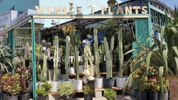 venice_plants.jpg