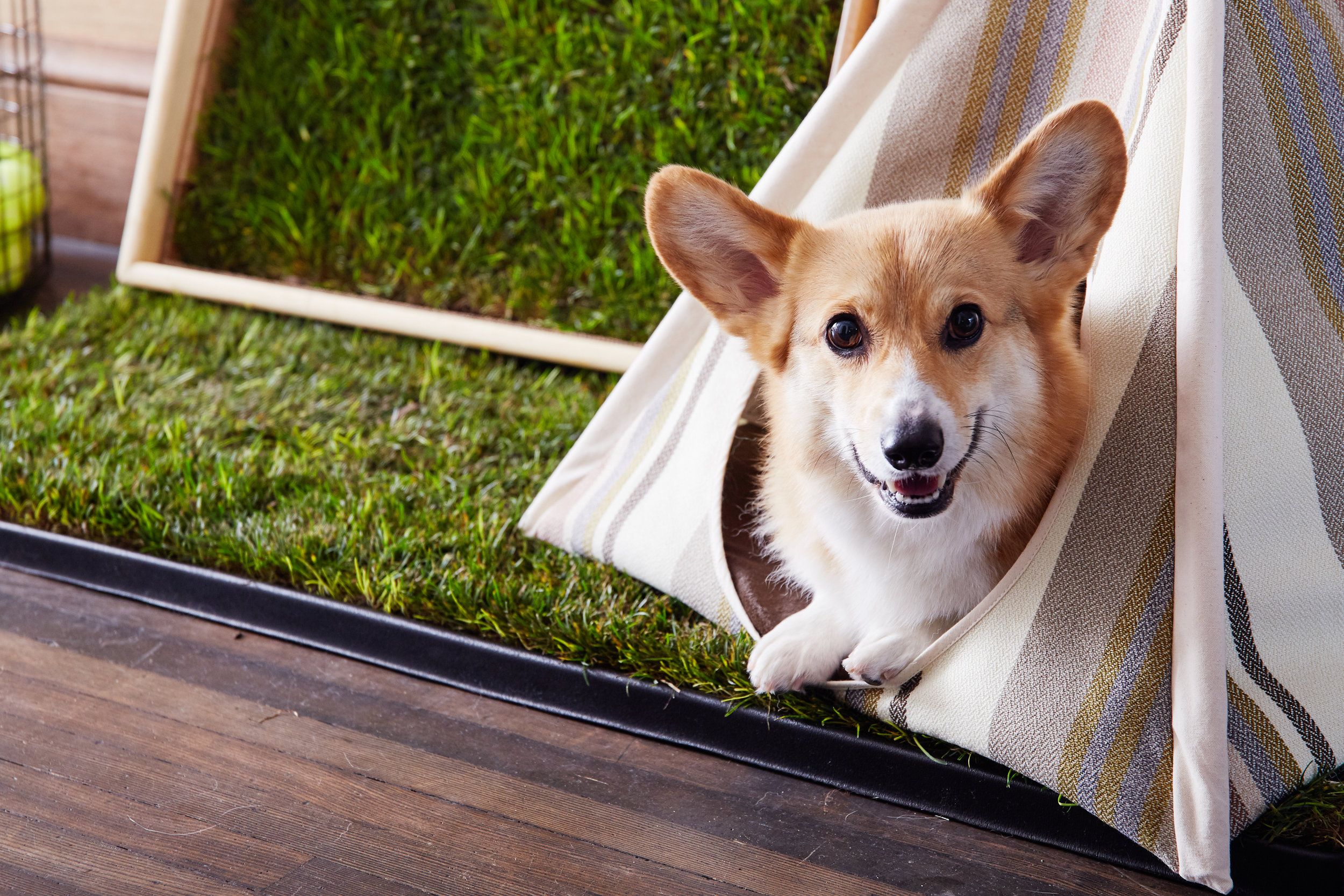 CHOMPERS @chompersthecorgi    Read More