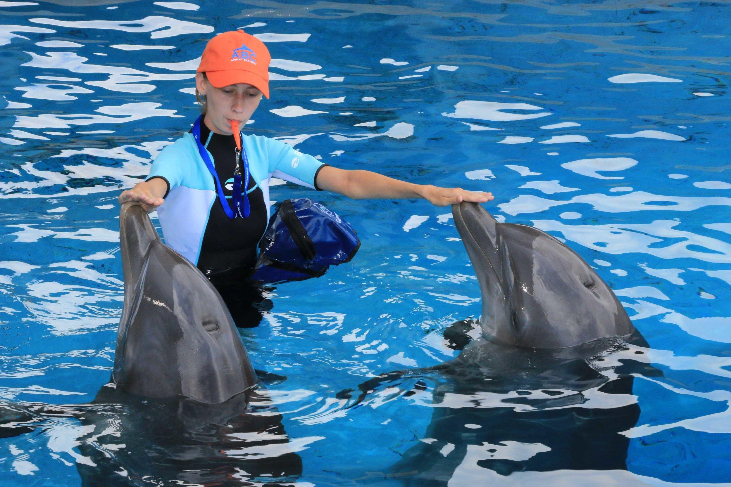 Lauren Training Dolphins