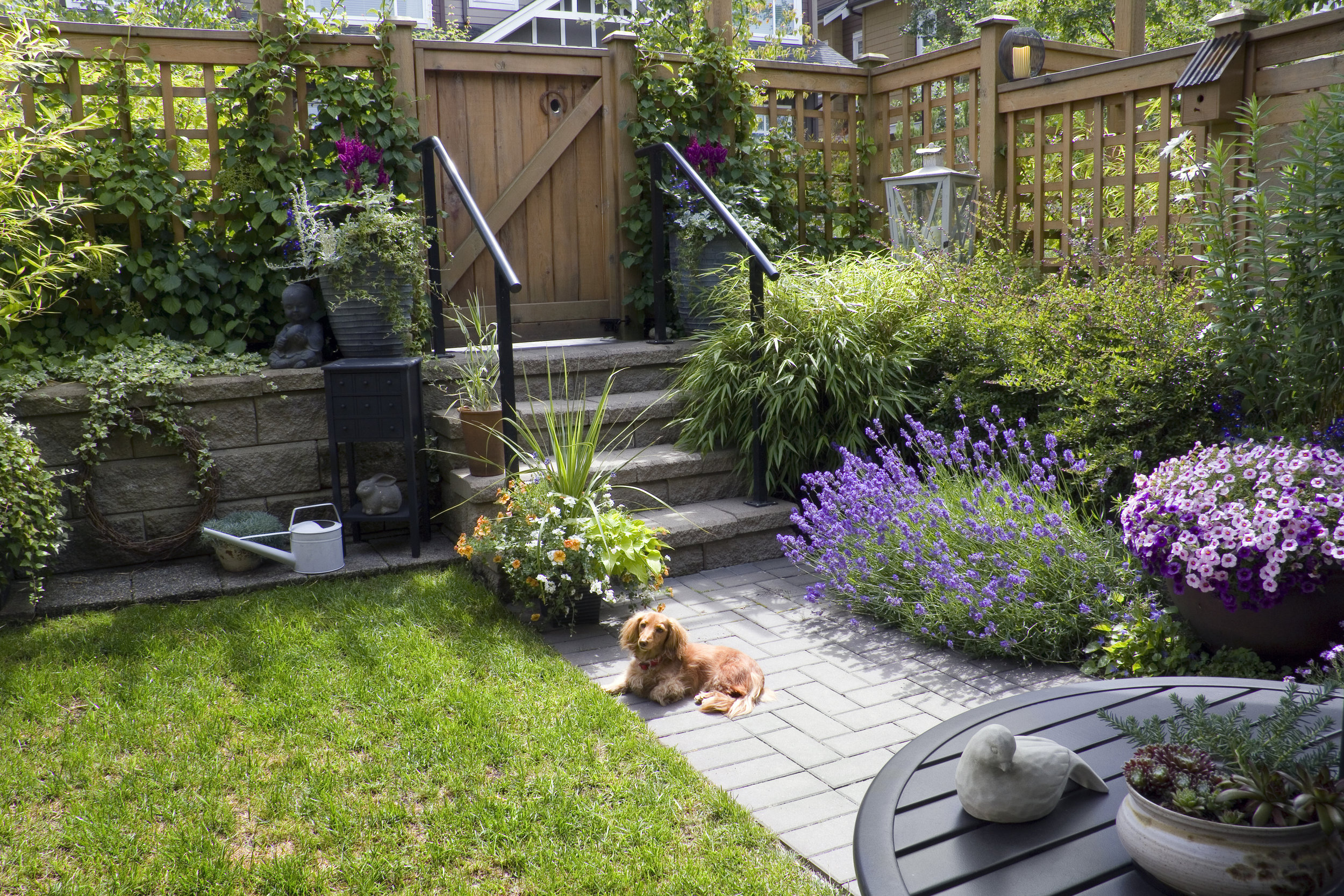 Dog Sensory Garden
