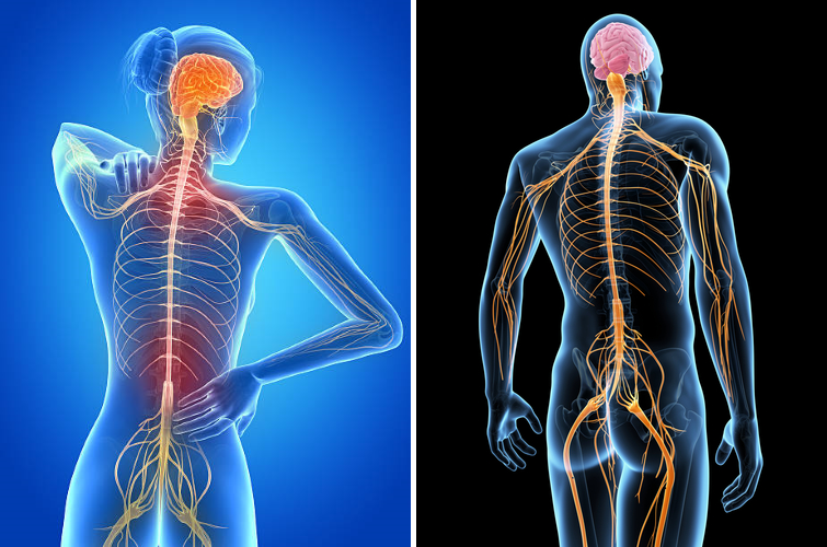 Neuromuscular _PNG.png