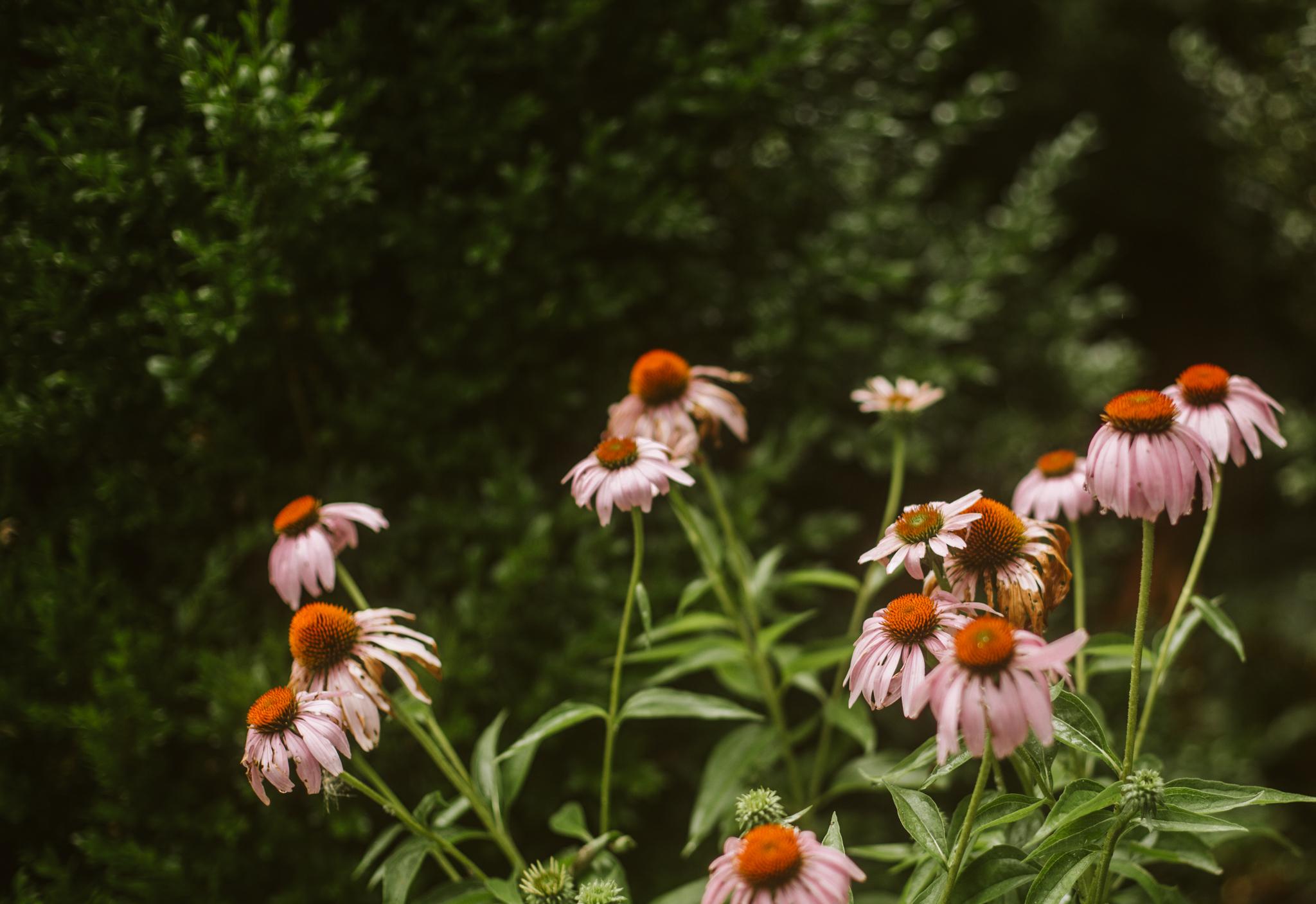 rebeccaburtphotography.raspberryplainmanor.leesburgweddingphotographer-27.JPG