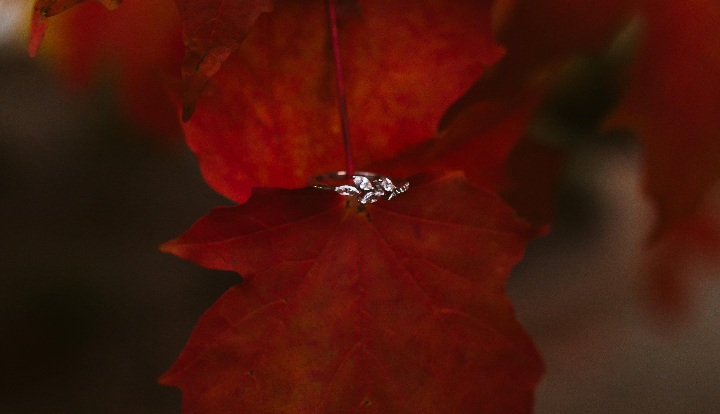 rebeccaburtphotography.DorotaandDwight.Engagementsession.RichmondVirginia.MonumentAvenue-84.JPG