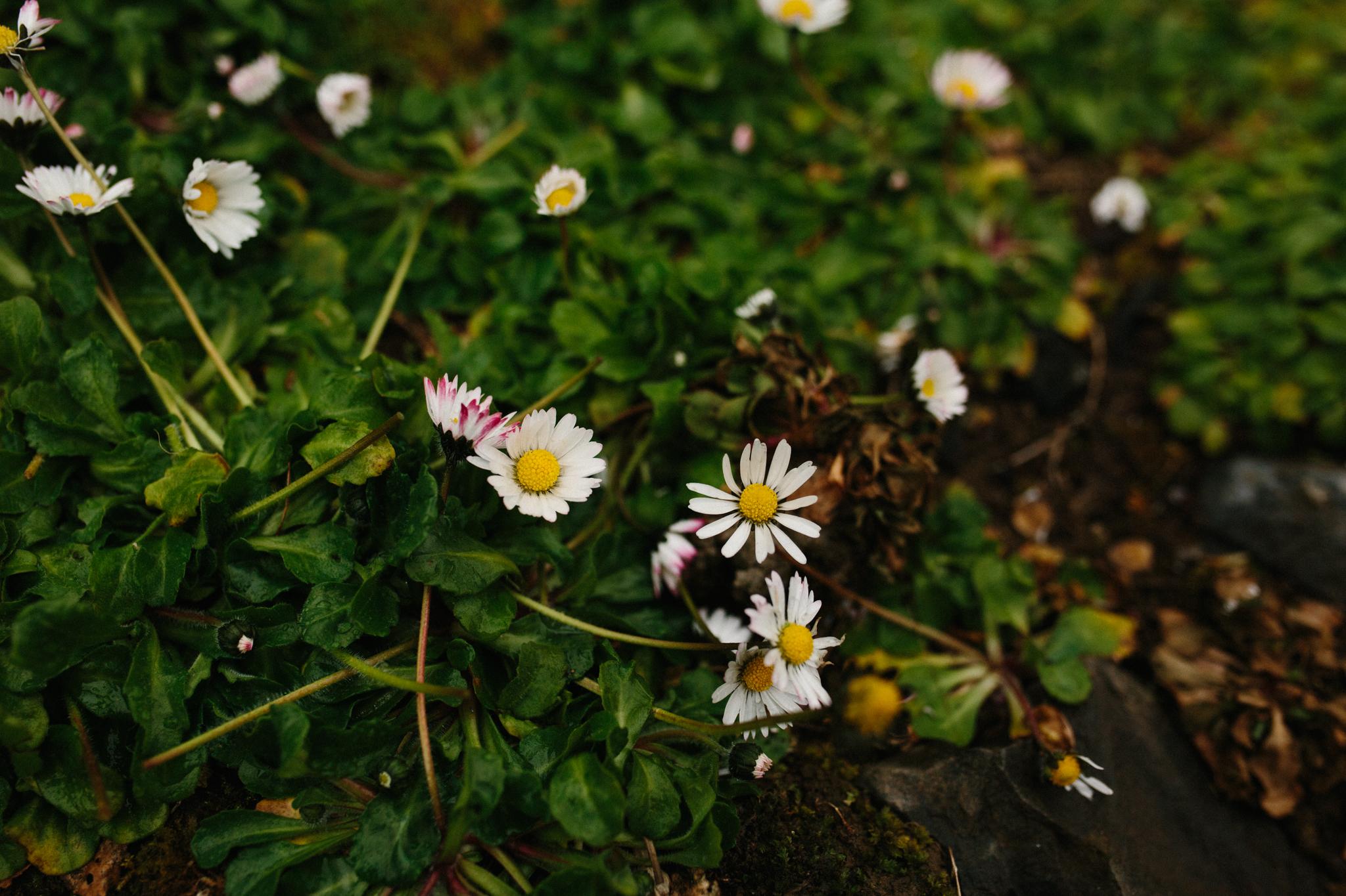 ireland_galway_dublin_rebecca_burt_photography-77.jpg