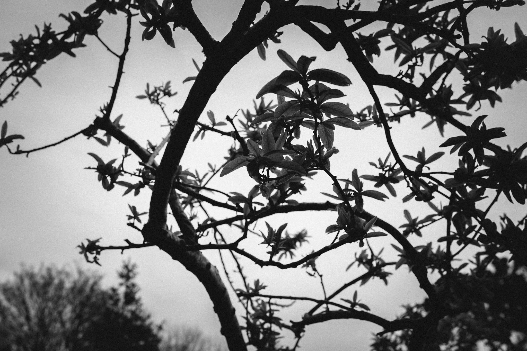 ireland_galway_dublin_rebecca_burt_photography-100.jpg