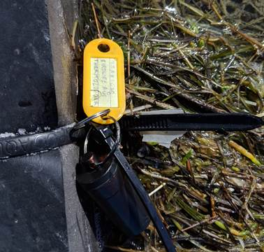 Thermologger attached to a floating roost