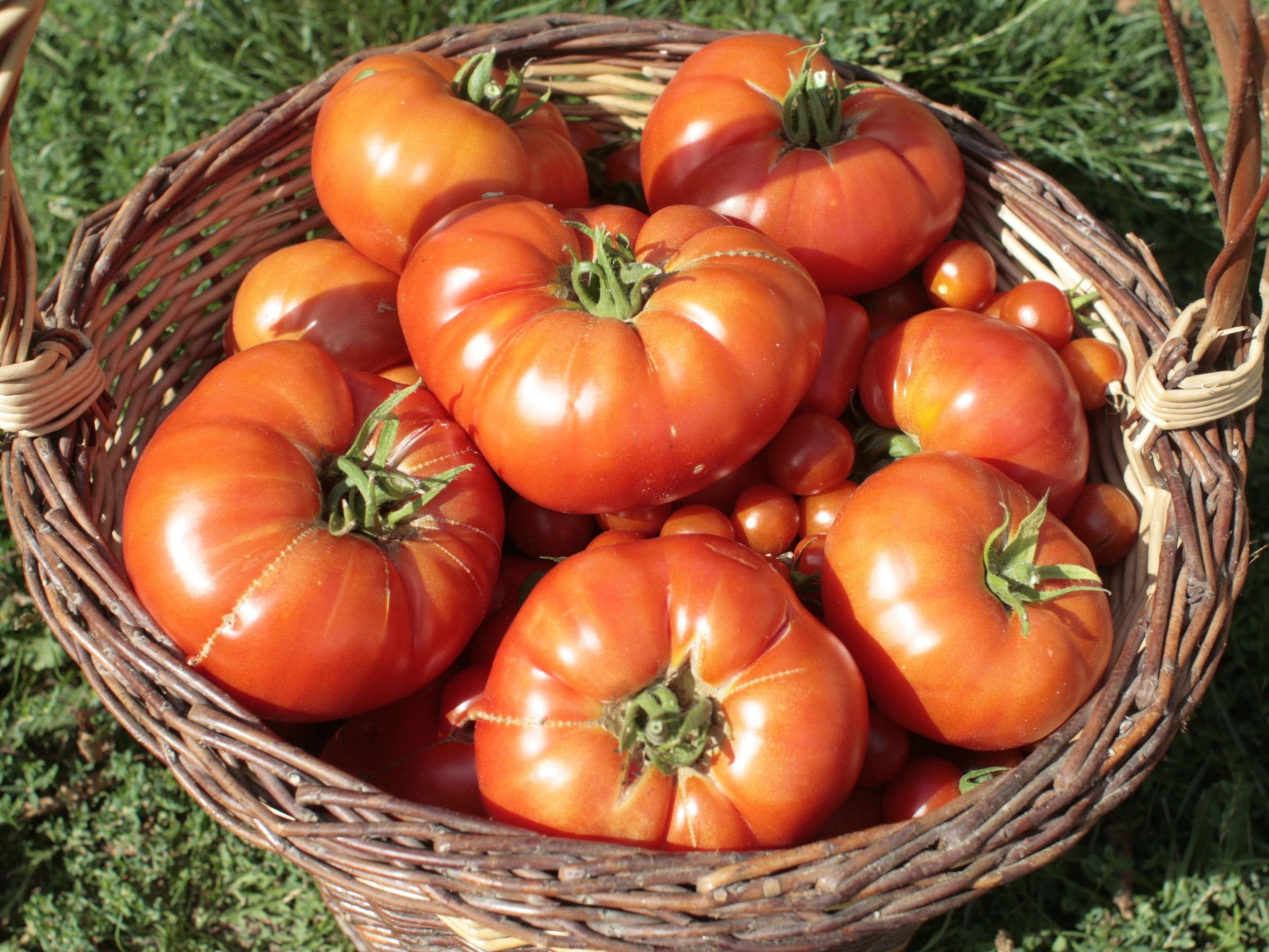 Made with our own farm fresh tomatoes! -