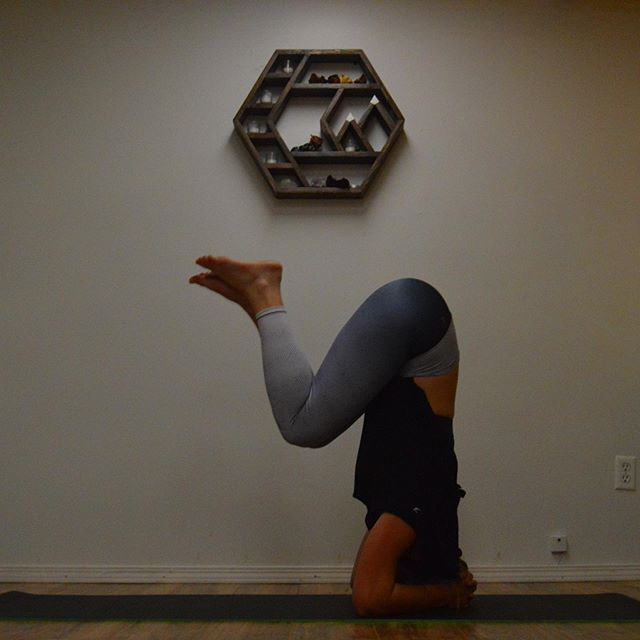 Ashtanga yoga tomorrow night at 6pm. Come explore the primary series! Great introduction for those looking to create a strong winter self-practice. Come explore!