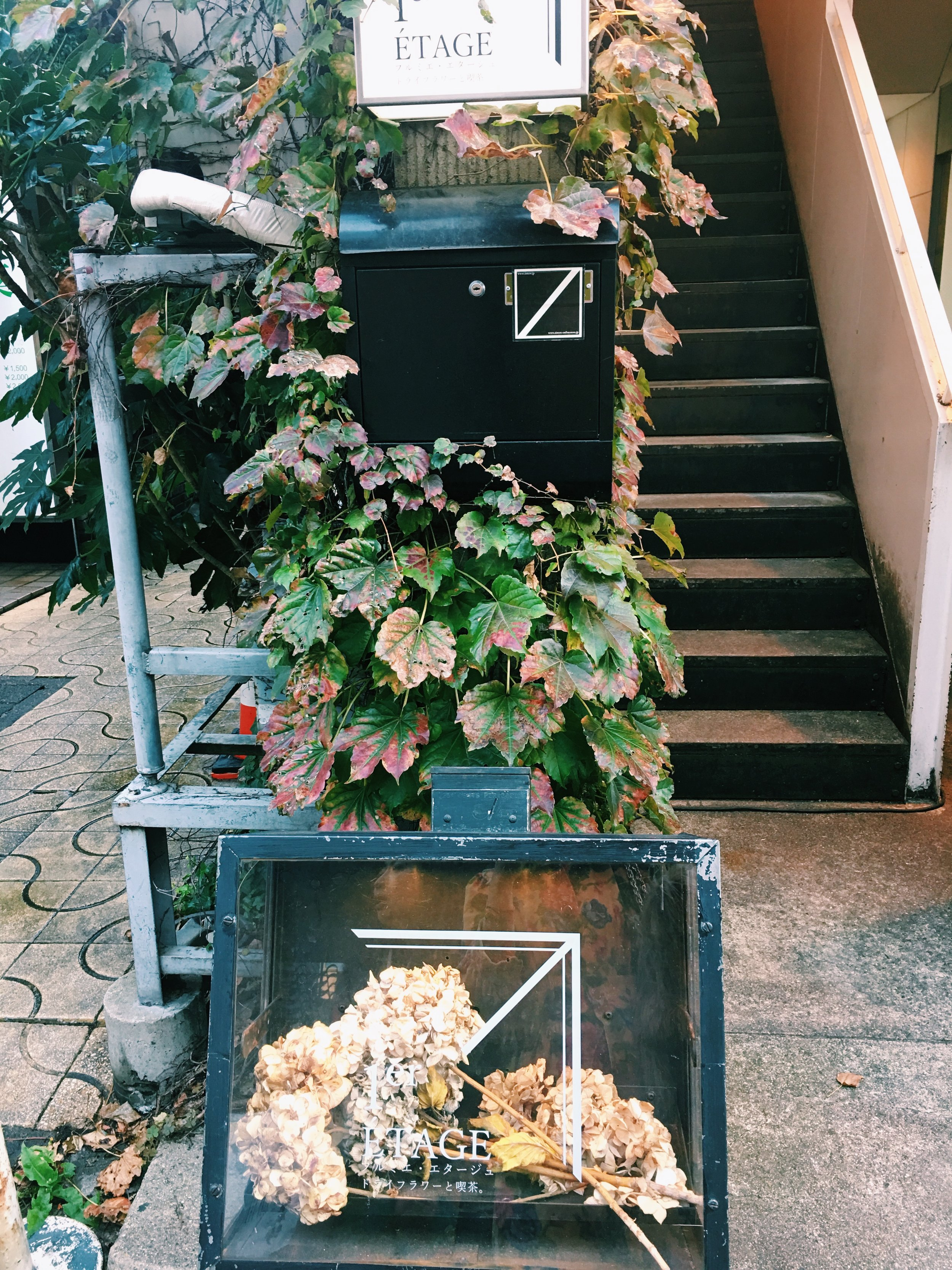 This is a dry flower cafe on the upstairs, the cafe is full of dry flowers and leaves, very beautiful but it has so strong dry plants smile, so I didn't eat there.