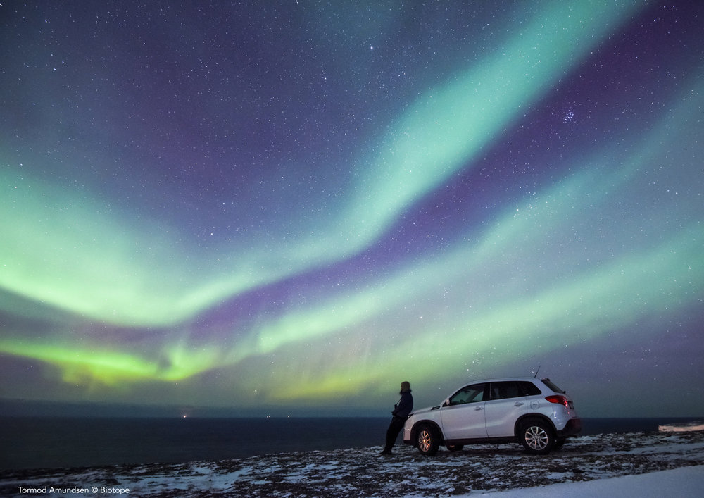 Car hire can be easily arranged in Kirkenes or you can have a car delivered to Vardø.