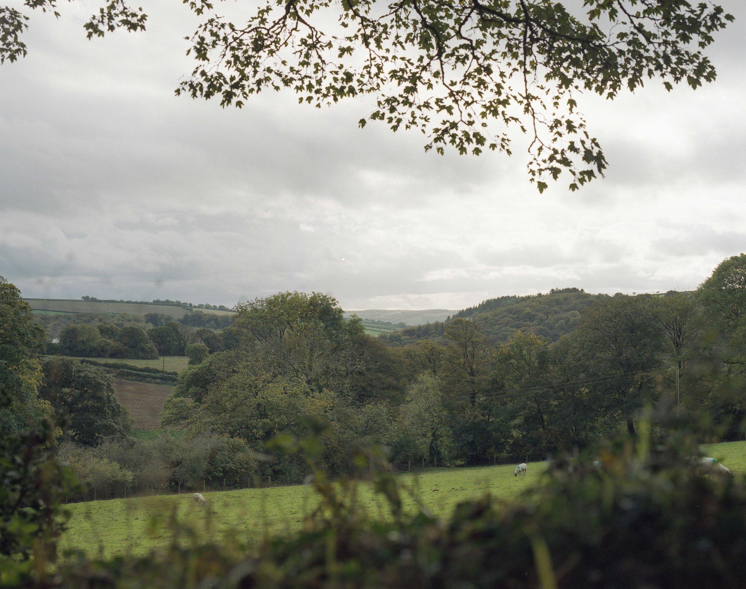 Moorland101.jpg